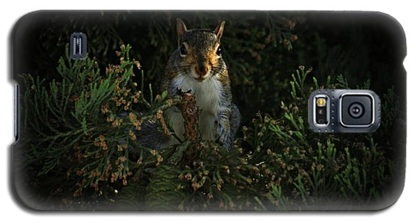 Portrait Of A Squirrel Galaxy S5 Case