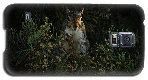 Portrait Of A Squirrel Galaxy S5 Case