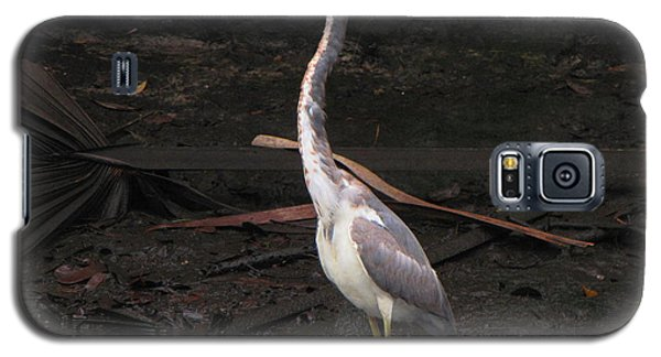 Galaxy S5 Case featuring the photograph Portrait Of A Tri-colored Heron by Barbara Bowen