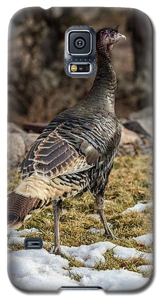 Portrait Of A Wild Turkey Galaxy S5 Case