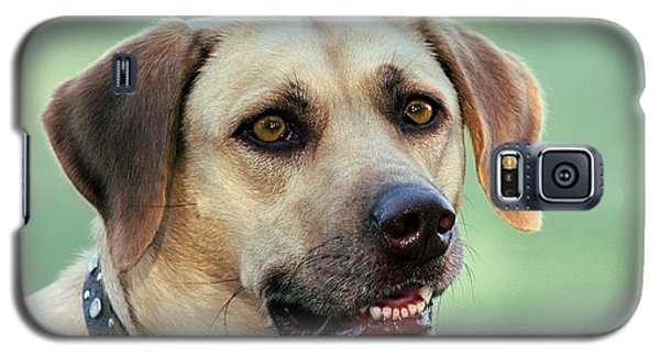 Portrait Of A Yellow Labrador Retriever Galaxy S5 Case