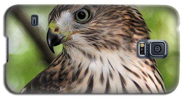 Portrait Of A Young Cooper's Hawk Galaxy S5 Case by Doris Potter