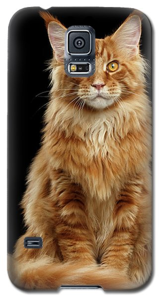 Portrait Of Ginger Maine Coon Cat Isolated On Black Background Galaxy S5 Case
