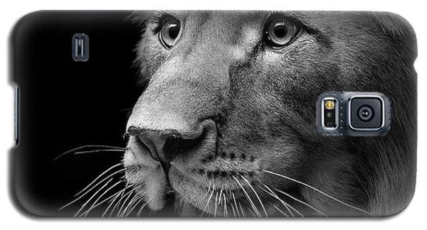Lion Galaxy S5 Case - Portrait Of Lion In Black And White II by Lukas Holas