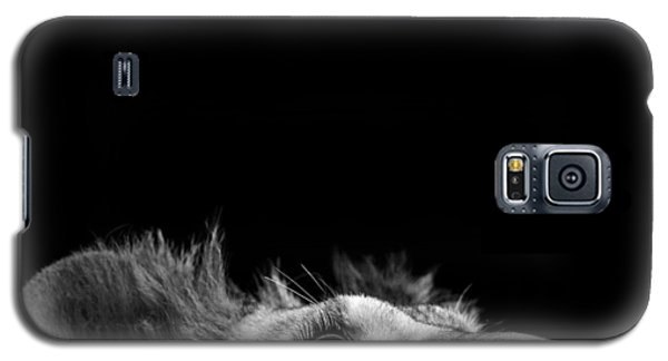 Lion Galaxy S5 Case - Portrait Of Lion In Black And White IIi by Lukas Holas