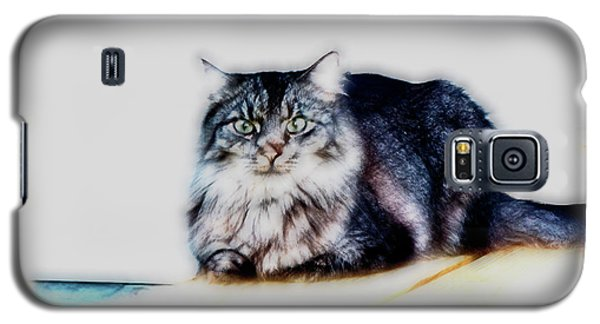 Portrait Of Maine Coon, Mattie Galaxy S5 Case