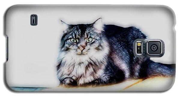 Portrait Of Maine Coon, Mattie Galaxy S5 Case