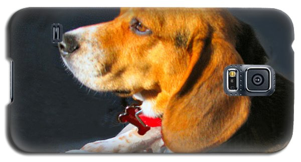 Portrait Of Pebbles - The Independent Beagle Galaxy S5 Case