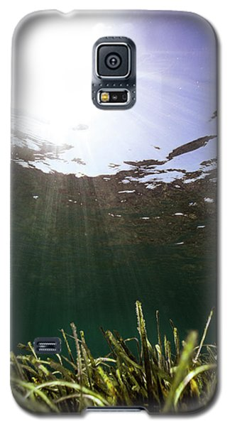 Posidonia Galaxy S5 Case