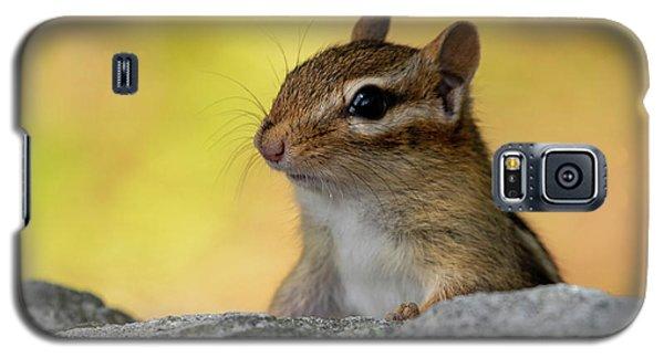 Posing Chipmunk Galaxy S5 Case
