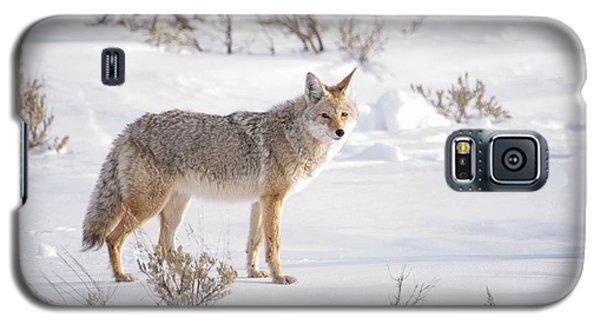 Posing Coyote Galaxy S5 Case