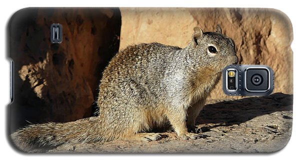Posing Squirrel Galaxy S5 Case
