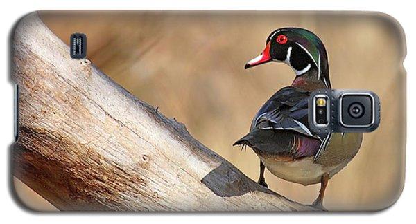 Posing Wood Duck Galaxy S5 Case