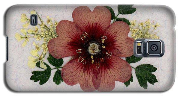 Potentilla And Queen-ann's-lace Pressed Flower Arrangement Galaxy S5 Case
