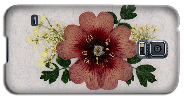 Potentilla And Queen-ann's-lace Pressed Flower Arrangement Galaxy S5 Case