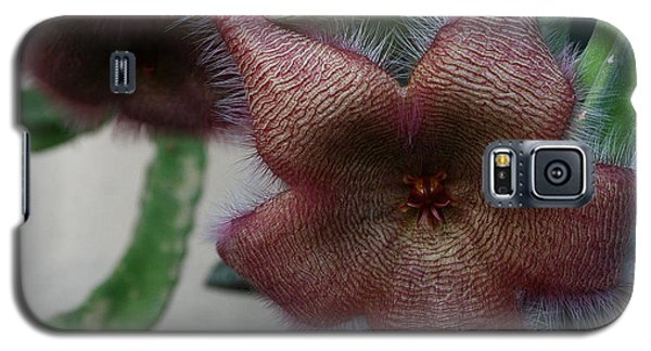 Galaxy S5 Case featuring the photograph Potted Starfish by Marna Edwards Flavell