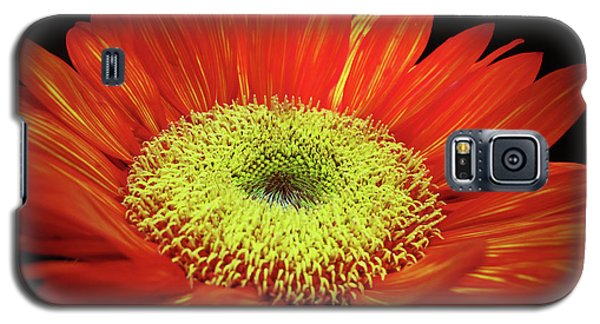 Prado Red Sunflower Galaxy S5 Case