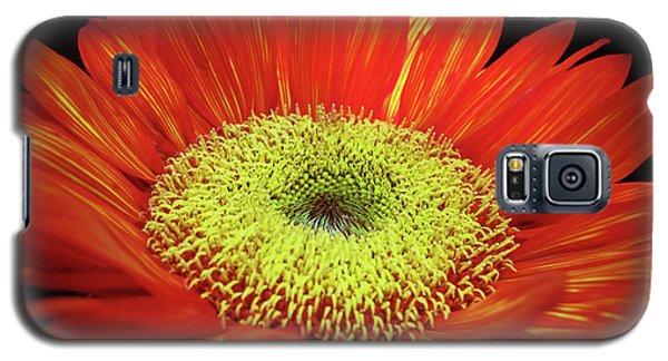 Prado Red Sunflower Galaxy S5 Case