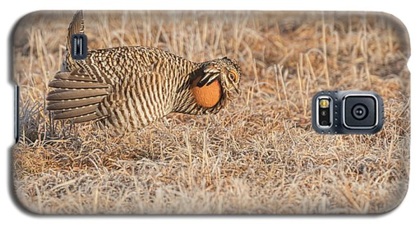 Galaxy S5 Case featuring the photograph Prairie Chicken 10-2015 by Thomas Young