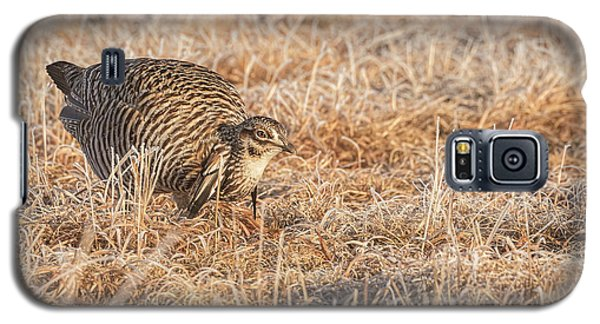 Galaxy S5 Case featuring the photograph Prairie Chicken 11-2015 by Thomas Young