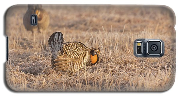 Galaxy S5 Case featuring the photograph Prairie Chicken 4-2015 by Thomas Young