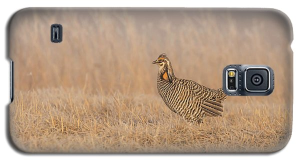 Galaxy S5 Case featuring the photograph Prairie Chicken 5-2015 by Thomas Young