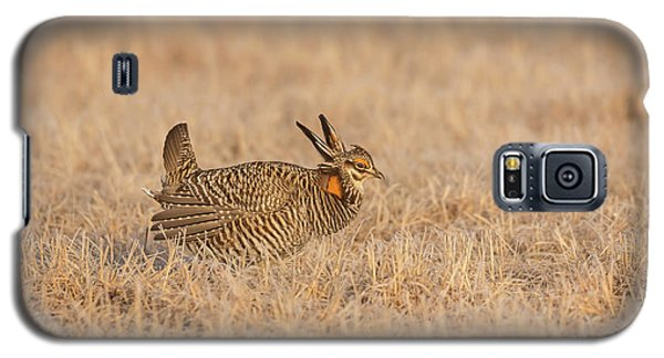 Galaxy S5 Case featuring the photograph Prairie Chicken 7-2015 by Thomas Young