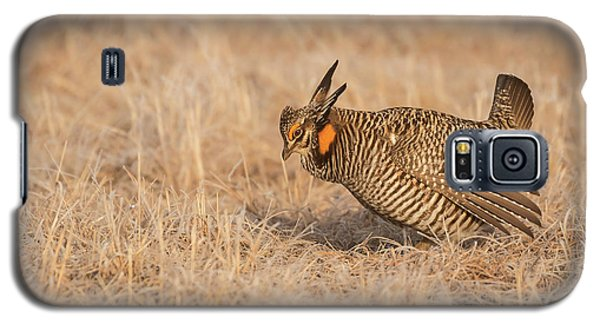 Galaxy S5 Case featuring the photograph Prairie Chicken 8-2015 by Thomas Young