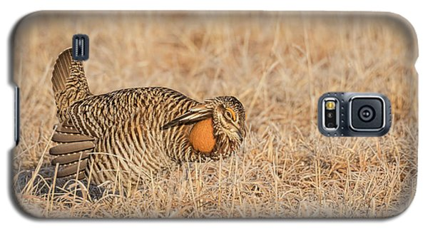 Galaxy S5 Case featuring the photograph Prairie Chicken 9-2015 by Thomas Young