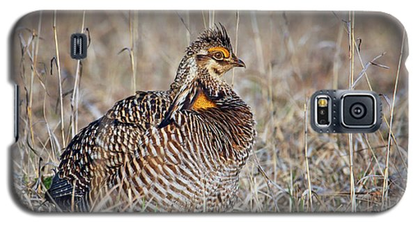 Galaxy S5 Case featuring the photograph Prairie Chicken - Portrait by Nikolyn McDonald