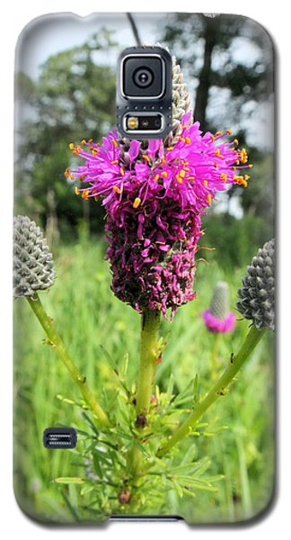 Galaxy S5 Case featuring the photograph Prairie Clover by Scott Kingery