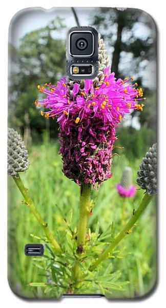 Prairie Clover Galaxy S5 Case