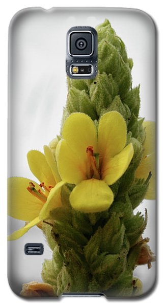 Galaxy S5 Case featuring the photograph Prairie Cone by Dylan Punke