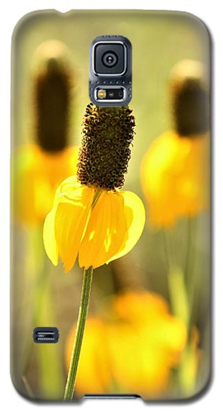Prairie Coneflower In Morning Light Galaxy S5 Case