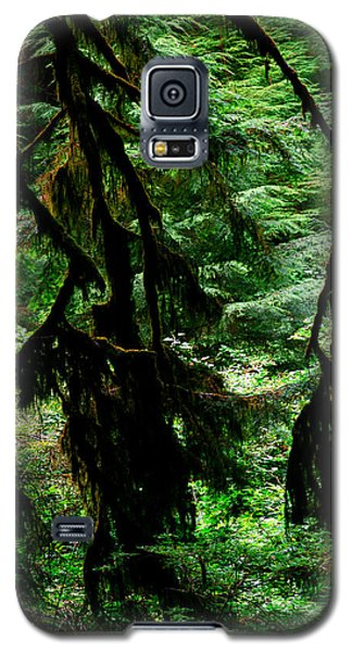 Prairie Creek Redwoods State Park 12 Galaxy S5 Case