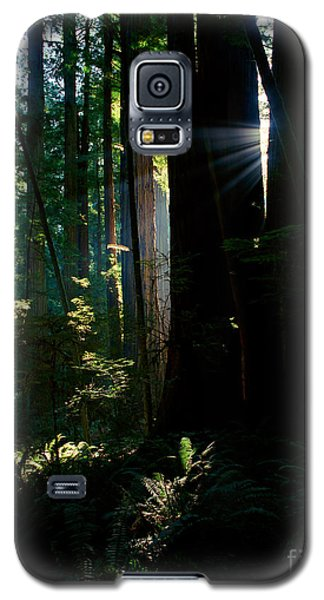 Prairie Creek Redwoods State Park 6 Galaxy S5 Case
