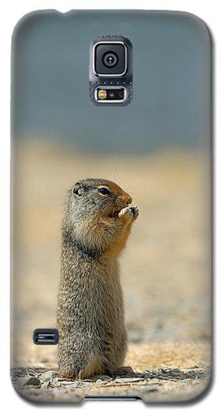 Animals Galaxy S5 Cases - Prairie Dog Galaxy S5 Case by Sebastian Musial