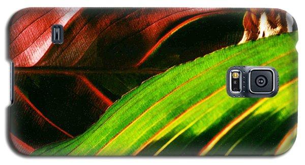 Prayer Plant Passing Galaxy S5 Case