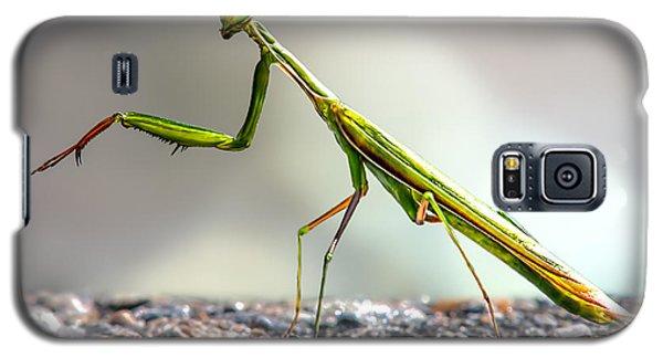 Praying Mantis  Galaxy S5 Case