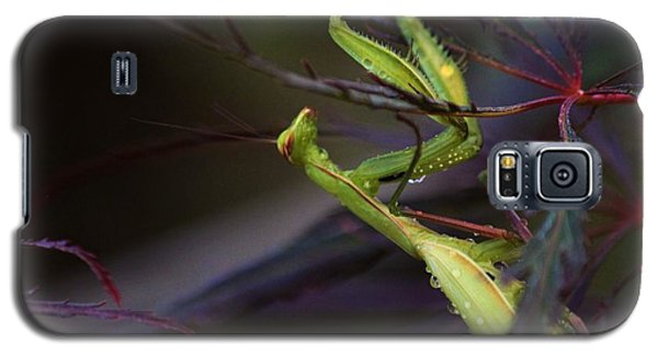 Praying Mantis Galaxy S5 Case