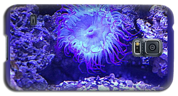 Galaxy S5 Case featuring the photograph Predatory Terrestrial Sea Anemone by Richard W Linford