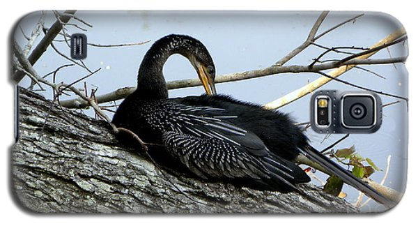 Preening Anhinga Galaxy S5 Case by Terri Mills