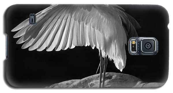 Preening Great Egret By H H Photography Of Florida Galaxy S5 Case by HH Photography of Florida