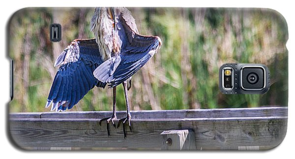 Preening Gret Blue Heron Galaxy S5 Case by Edward Peterson