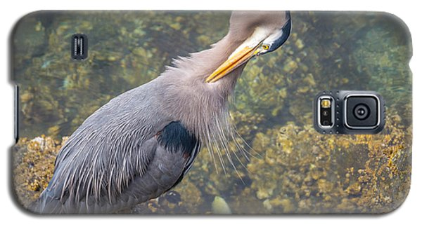 Preening Heron Galaxy S5 Case by Jerry Cahill