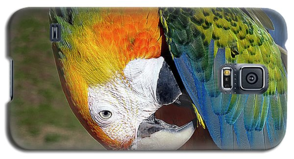 Preening Macaw Galaxy S5 Case by Melissa Messick