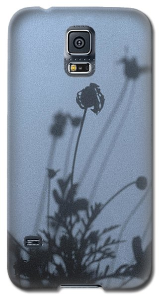 Pressed Daisy Bush Blue Galaxy S5 Case