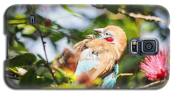 Red Cheeked Cordon Bleu Finch Galaxy S5 Case