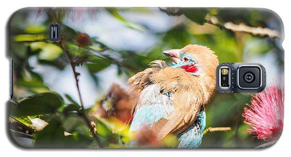 Red Cheeked Cordon Bleu Finch Galaxy S5 Case