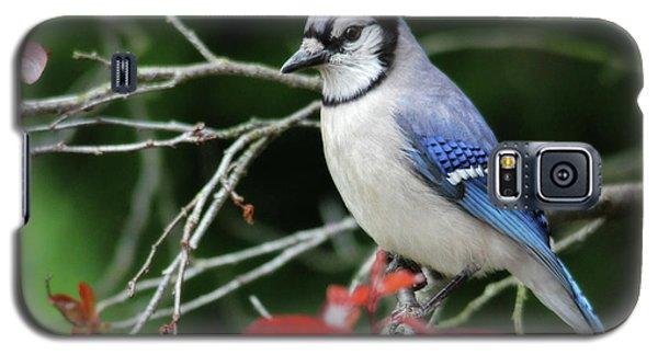 Pretty Blue Jay Galaxy S5 Case
